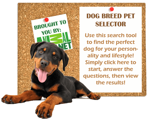 dog-breed-pet-selector