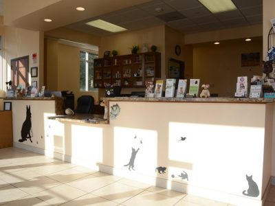 The front desk and reception area in the front of the office